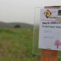 Alumnos del Colegio Santa Teresa de Badajoz plantan 200 árboles en El Rebellao