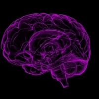Científicos descubren el motivo del envejecimiento del cerebro