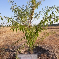 Nuevos árboles ayudan a reforestar El Rebellao